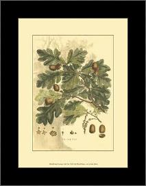 Small Antique Oak Tree art print poster with simple frame