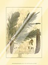 Small Antique Weymouth Pine Tree art print poster with laminate
