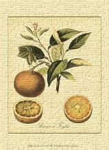 Petite Tuscan Fruits III art print poster transferred to canvas