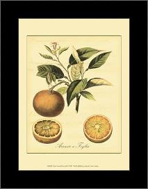Petite Tuscan Fruits III art print poster with simple frame