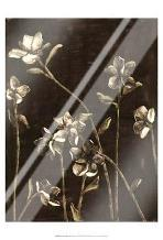 Medium Blossom Nocturne I art print poster with laminate