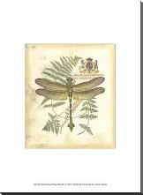 Mini Regal Dragonfly III art print poster with block mounting