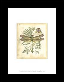 Mini Regal Dragonfly III art print poster with simple frame
