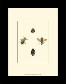 Insecte I art print poster with simple frame