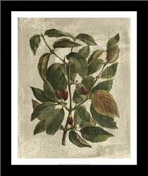 Deshayes Tree II art print poster with simple frame