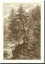 Sepia Larch Tree art print poster with block mounting