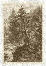Sepia Larch Tree art print poster transferred to canvas