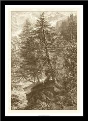 Sepia Larch Tree art print poster with simple frame