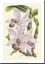 Delicate Orchid I art print poster with block mounting