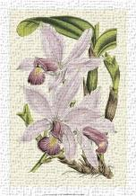 Delicate Orchid I art print poster transferred to canvas
