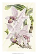 Delicate Orchid I art print poster with laminate