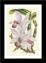 Delicate Orchid I art print poster with simple frame