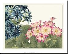 Japanese Flower Garden IV art print poster with block mounting
