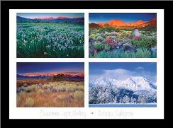 Four Seasons art print poster with simple frame