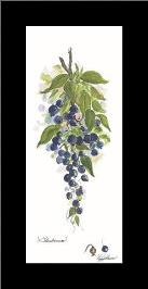 Blueberries art print poster with simple frame