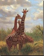 African Giraffes art print poster with block mounting
