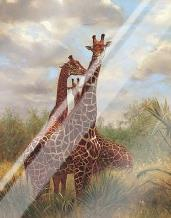 African Giraffes art print poster with laminate