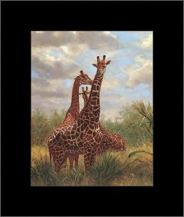 African Giraffes art print poster with simple frame