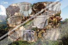 Dinosaurs - Facts - Natural History Museum art print poster with laminate