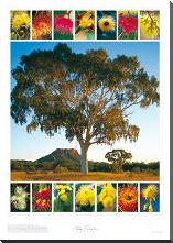 Eucalypt Montage art print poster with block mounting