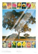Eucalypt Montage art print poster with laminate