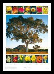 Eucalypt Montage art print poster with simple frame