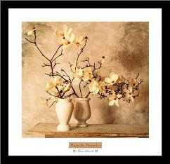 Magnolia Branches art print poster with simple frame