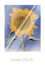 Sunflower, New Mexico, 1935 art print poster with laminate