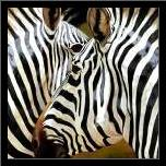 Zebra Close-up art print poster with simple frame