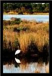Assateague Island I art print poster with simple frame
