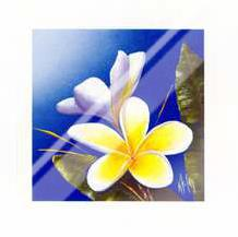 Frangipani Scent art print poster with laminate