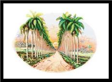 Pinar del Rio art print poster with simple frame