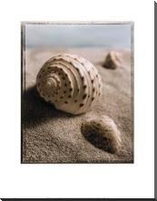 Seashell I art print poster with block mounting