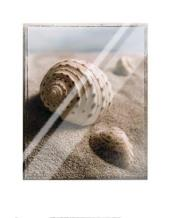Seashell I art print poster with laminate