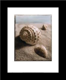 Seashell I art print poster with simple frame