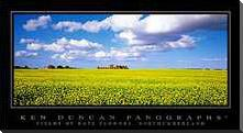 Fields of Rape Flowers, Northumberland art print poster with block mounting