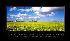 Fields of Rape Flowers, Northumberland art print poster with simple frame
