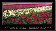 Field of Rainbows, Washington State art print poster with block mounting