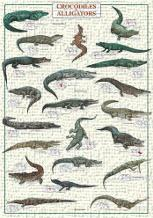 Crocodiles and Alligators art print poster transferred to canvas