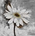 Abstract Daisy Flower art print poster transferred to canvas