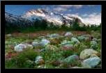 AK, Alsek-Tatshenshini Meadow landscape art print poster with simple frame