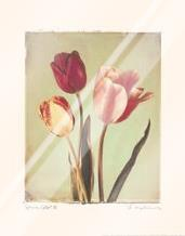 Spring Color II art print poster with laminate