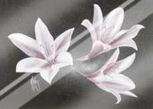 Evening Lillies art print poster with laminate