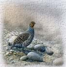 Bird between stones art print poster transferred to canvas
