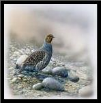 Bird between stones art print poster with simple frame