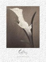 Callas art print poster transferred to canvas