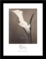 Callas art print poster with simple frame