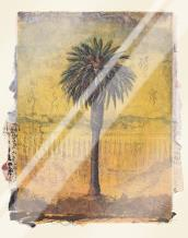 Palm Study #2 art print poster with laminate