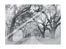Oak Arches art print poster with laminate