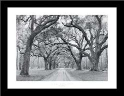 Oak Arches art print poster with simple frame